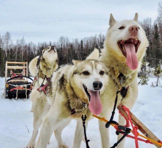 dog sledding tour and fat tire biking tour